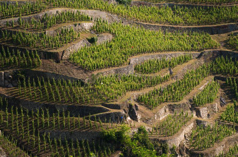 Fascinant Week-End Vignobles & Découvertes en Condrieu – Côte-Rôtie (24 et 25 octobre 2015) !
