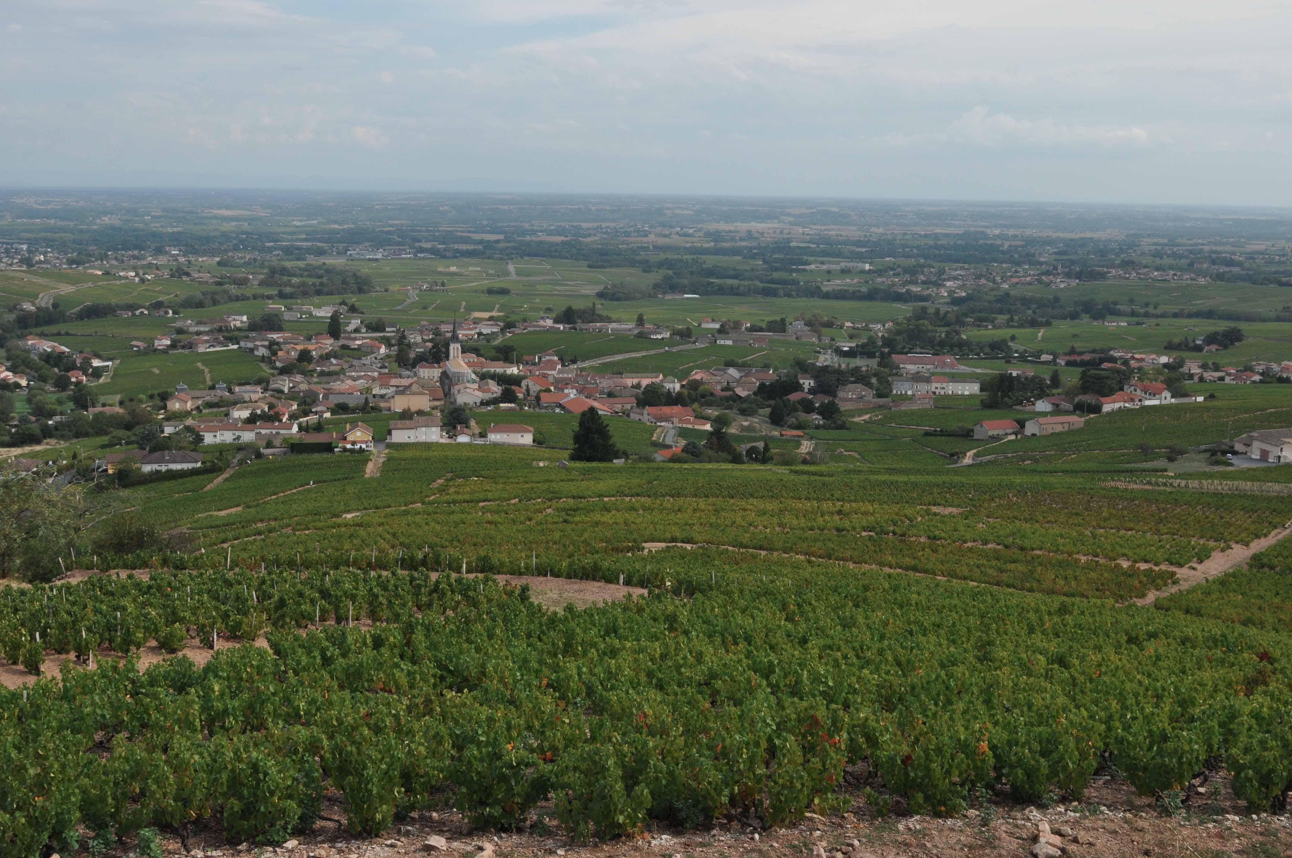 Mont Brouiily ©Godet_0386