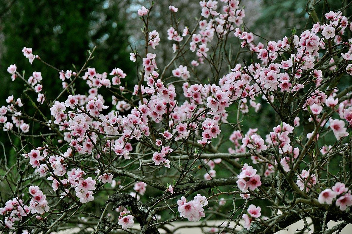 Fleurs printemps ©Godet_0231