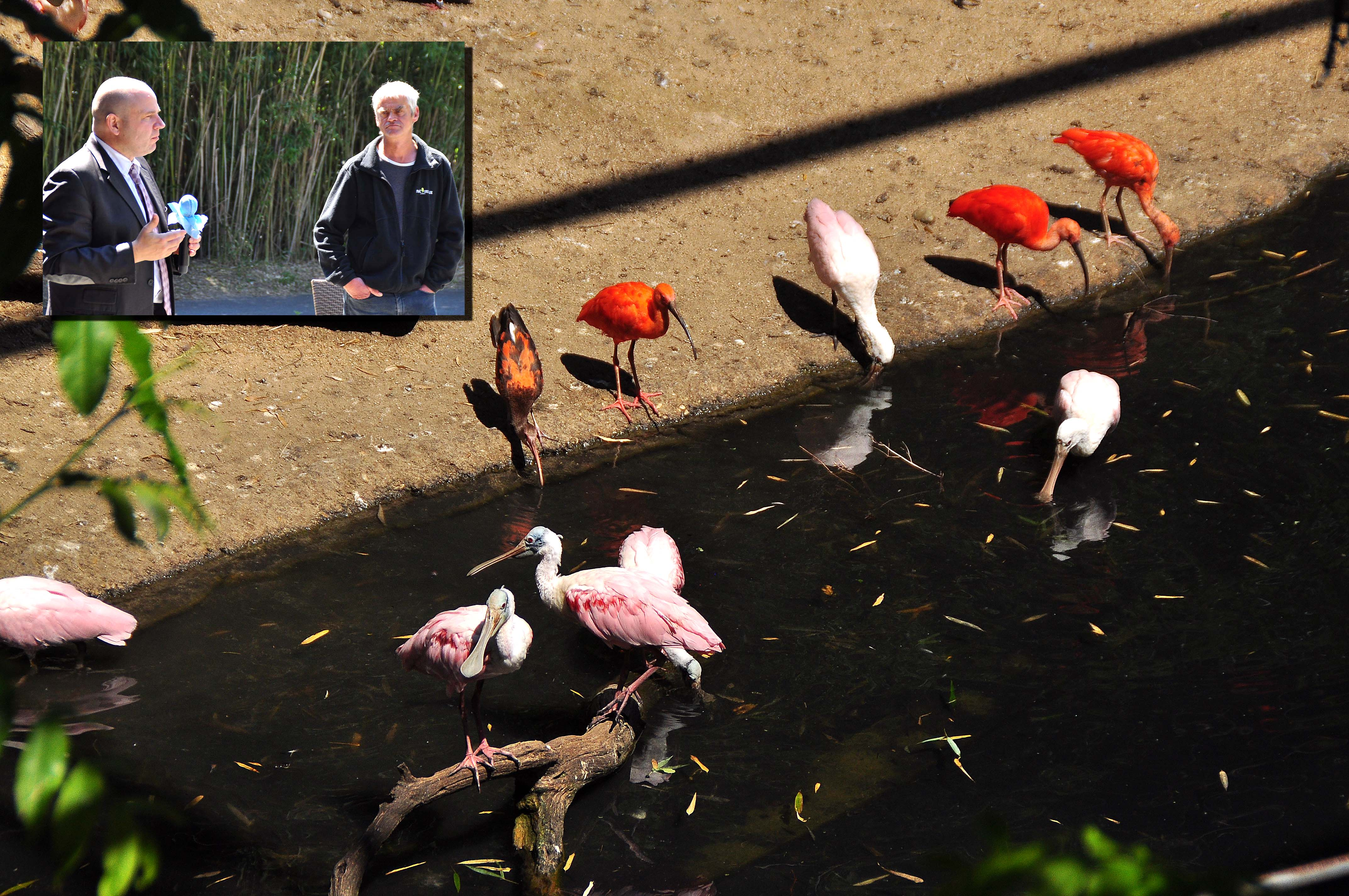 Parc Oiseaux Godet_0495