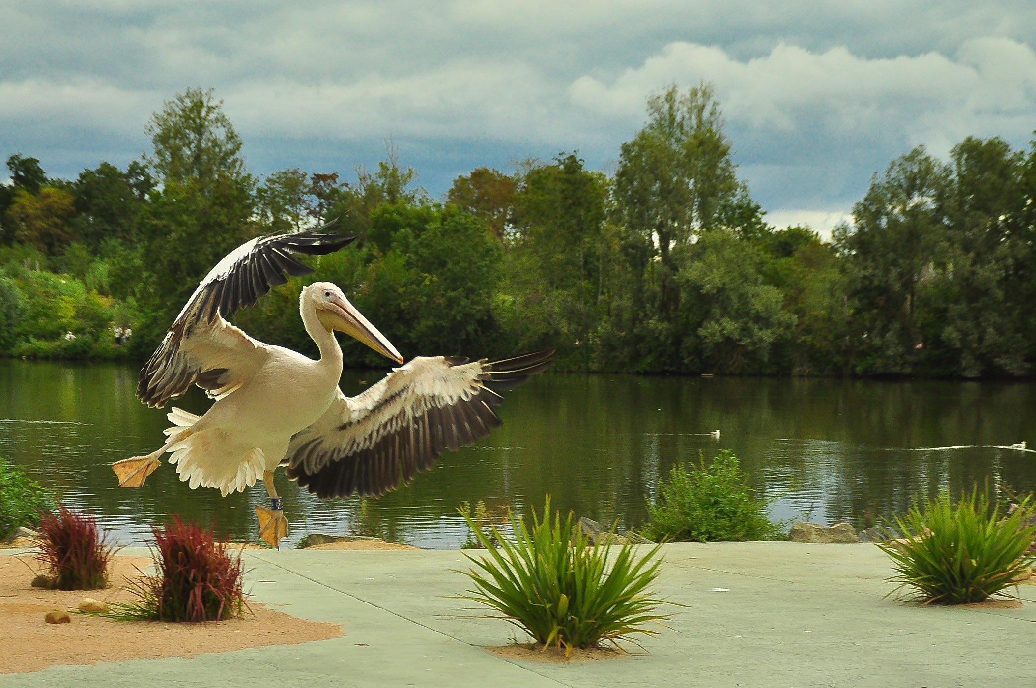 Parc des Oiseaux ©Godet_0152